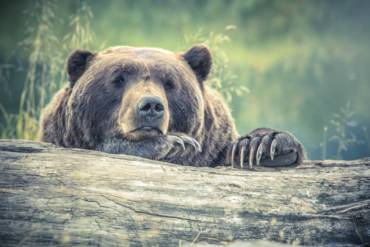 Stop hibernating: You're missing out on company blog benefits